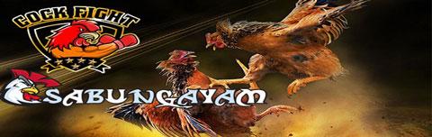 judisabung ayam